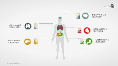 扁平化的人体器官PPT素材