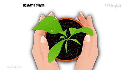 成长中的植物之双手呵护图形素材下载