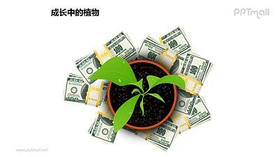 成长中的植物之金钱呵护下的植物图形素材下载