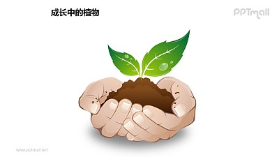 """成长中的植物之""""捧在手心里""""植物图形素材下载"""