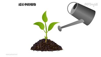 成长中的植物之浇水中的植物图形素材下载