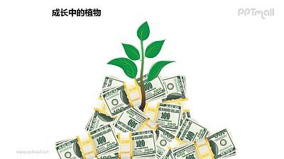 成长中的植物之金钱呵护长大的植物图形素材下载
