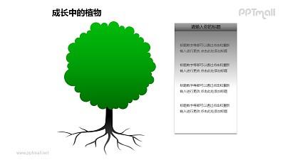 成长中的植物之2部分大树图形素材下载
