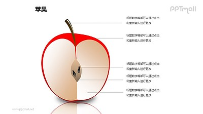 苹果——苹果的横截面结构解析PPT模板素材