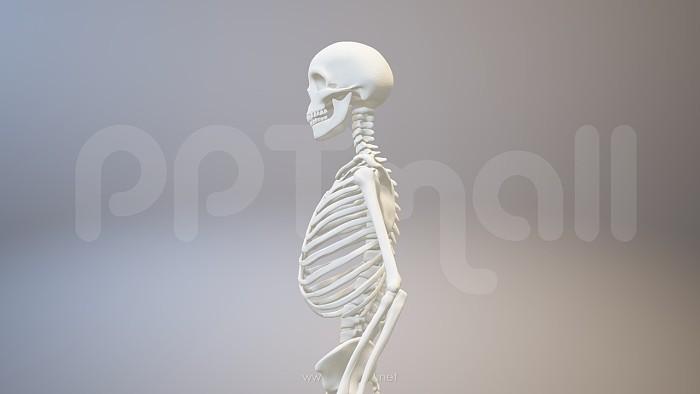 骨架PPT模板下载