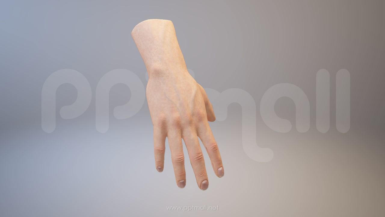 3D人体肌肉组织-手掌模型PPT素材下载