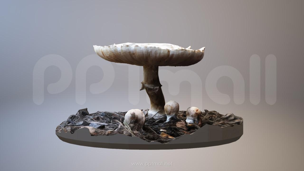 在野外生长的小蘑菇3D模型PPT场景素材