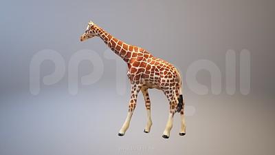 长颈鹿3D模型PPT素材