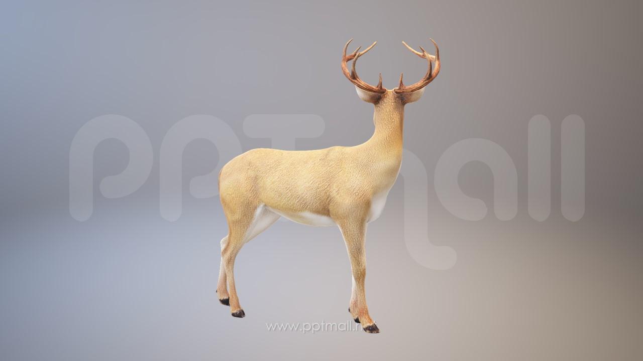 一只很漂亮的鹿3D模型PPT素材下载