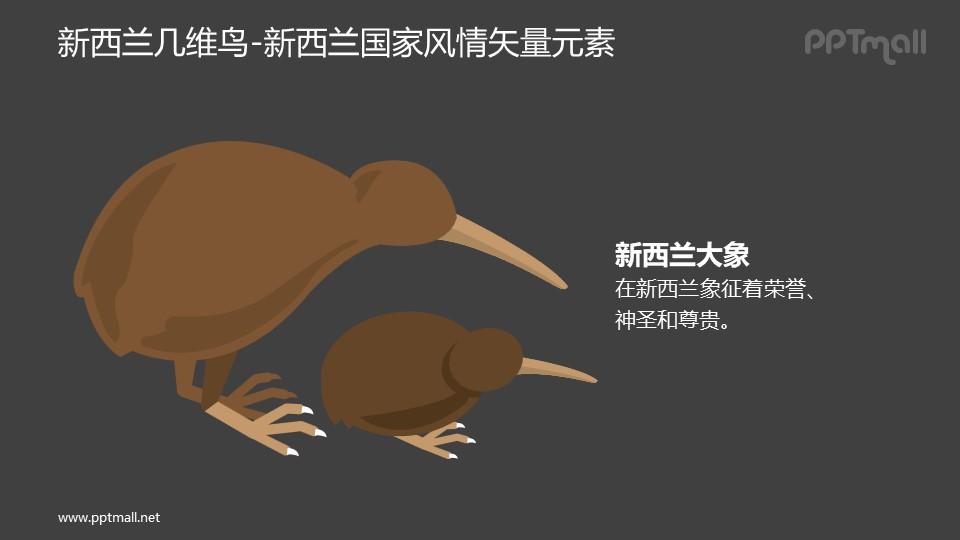 几维鸟-新西兰国家风情PPT图像素材下载
