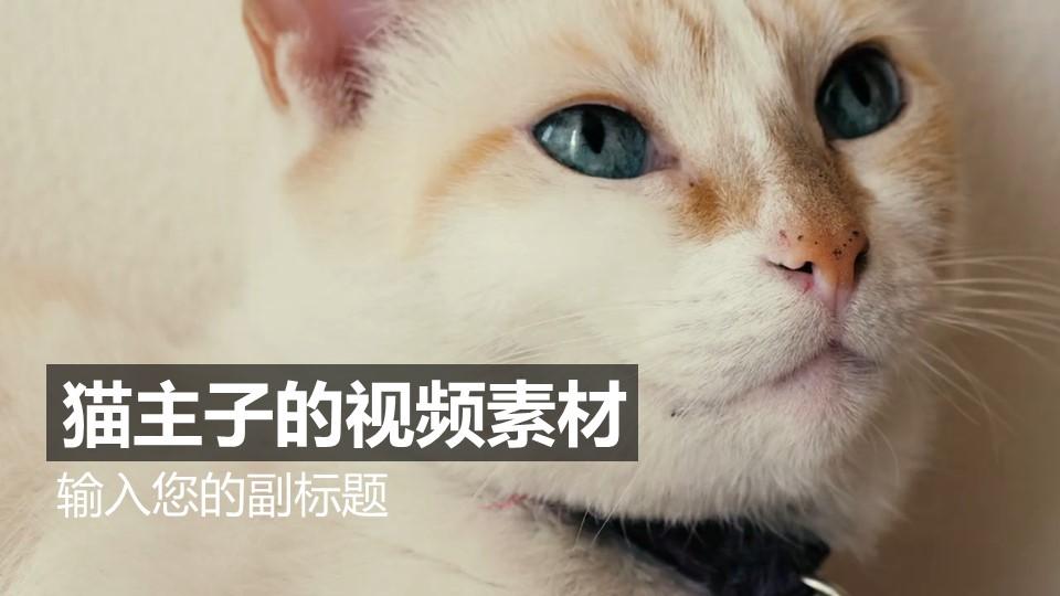 可爱的白猫视频动态背景PPT动画模板素材下载